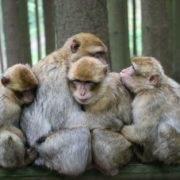 Abgastest an Affen